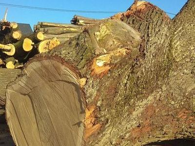 Drewno cieszyn